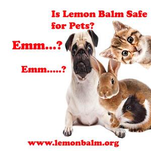 is lemon balm safe for your pet. Black Bedroom Furniture Sets. Home Design Ideas