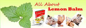 All About Lemon Balm